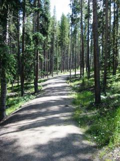 Alpine Path to Wolf Park (5 minute walk from cabin)