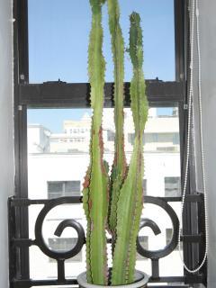 Lower Bathroom Cactus