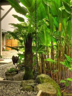 Bird's nest fern, hapuu and rattlesnake plant in garden