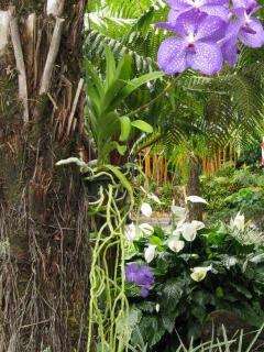 Vanda Sansai Blue orchid, hapuu and agapanthus in bloom