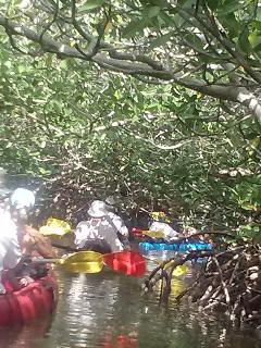 Kayaking the mangroves!