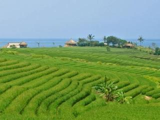 The property is made of 4 villas 1/2/4 and 6 Bedrooms is surrounded by Ocean and Rice fields