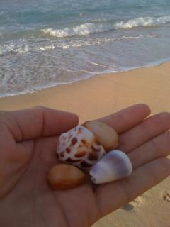 I found these shells on the beach next to Paia baby beach Hale