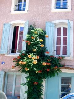 L'Isle street with trumpet flower creeper (as at la Marisol)