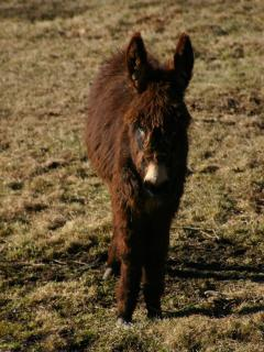 Our neighbour\'s donkeys love to have a chat with  you