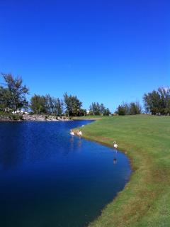 Flamingos at Provo Golf Club