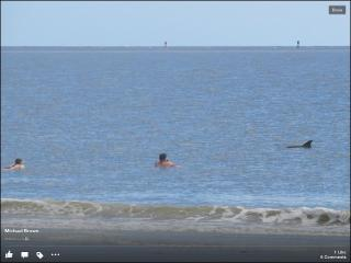 Dolphins add to the fun on Tybee