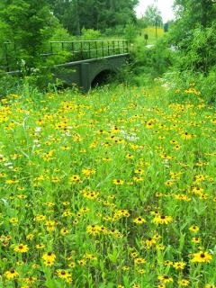 wild flowers at Gettysburg National Military Park