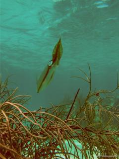 Snorkeling Sights