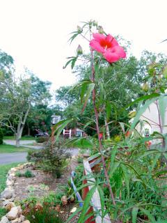 Driveway/Gardens - back entrance