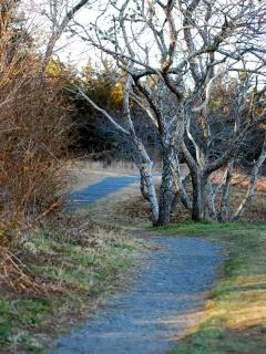 Fort Hill Walking Trails