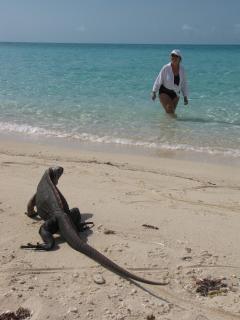 Iguana Cay - Cays tour