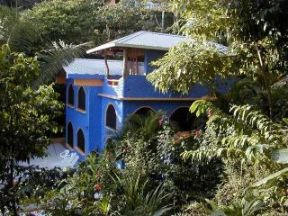 Situated in the Jungle