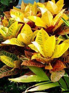 Beautiful flora surrounds you at Villa Margherita.