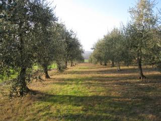 Casa Paterna, an elegant Tuscan/Umbrian retreat