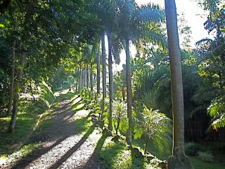 Enter the reserve and begin the palm-lined drive