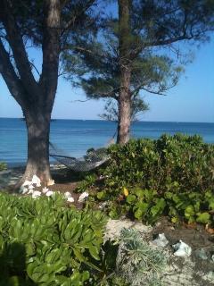 Oceanfront hammock
