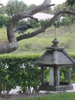 Watch the local birdlife from the kitchen window!