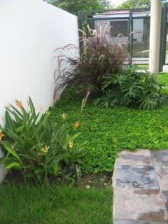 Lush Landscaping Around the House