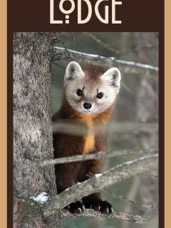 Welcome to Pine Marten Lodge!