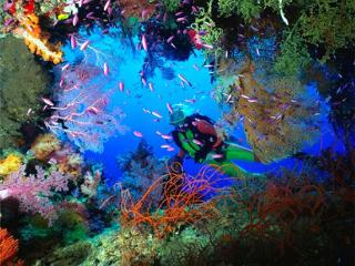- 10 Dives on Bequia - Advanced -, Port Elizabeth