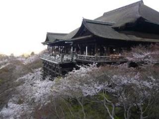The cherry blossoms in Kiyomizu Temple