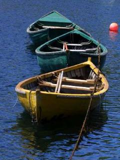 Fish dories