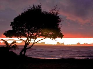 Christmas week open til 28th. Ground floor, ocean view, 30 seconds to our beach, Kapaa