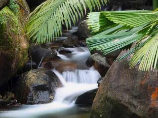 Daintree Secrets Award Winning Retreat