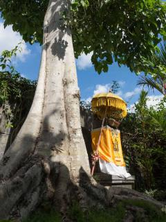 Bunga Pangi Entrance Garden