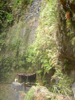 Along the levada - your host