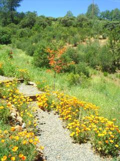 Poppy Path to the Cabana