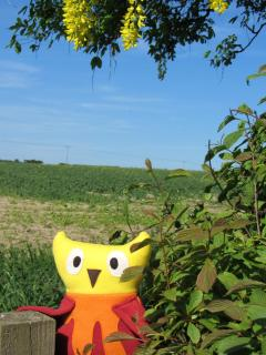 Oscar the Owl on the fence at Easthorpe - looking over the fields around