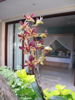 Tree orchid with bedroom in background