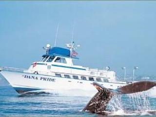 """Dana Point - the """"Whale Capital of the West"""". Enjoy Whale Watching!"""