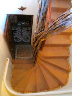 Our entry stairs, wrapped around a Brasilia tree