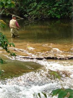 FLY FISHING  THE EAST FORK RIVER 50 ' FROM 'COTTAGE'