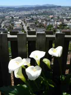 Walk around at the top of Bernal Heights ... you\'ll see some truly unusual San Francisco views.