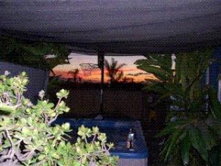 Pet Friendly beach cottage with private yard & spa, Encinitas