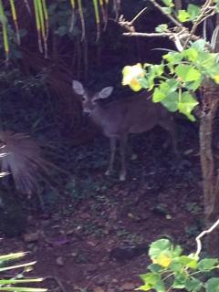 Wildlife in the Yard!