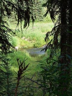 Our back yard...Coal Creek