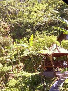 Balinese gazebo and lush jungle