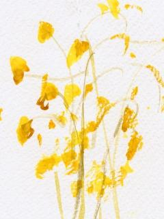 Wild mustard in Cambria