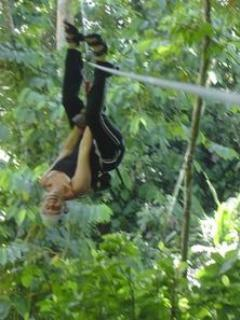 Zip Lines and many other activities nearby