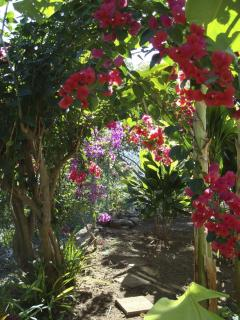 Lovely Bouganvilla covered garden pathway
