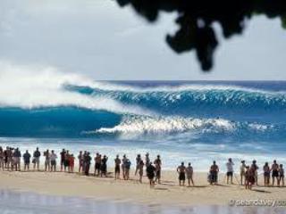 World Famous Pipline surf