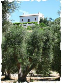 Villa Oleandro - veiw from our olive groves