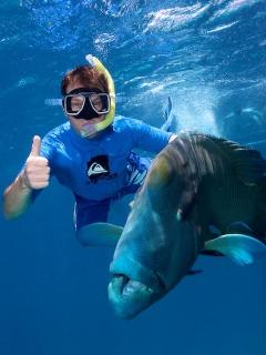 Snorkeler dropped under the surface to pose with this Napoleon Wrasse