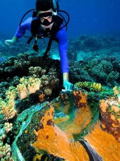 Scuba diver client with giant clam