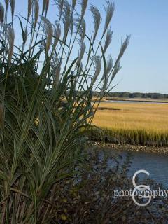 Marsh Grass on Deep Hole Creek